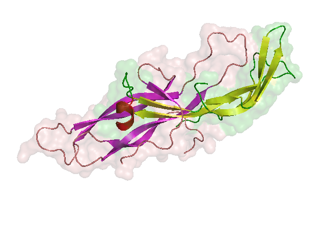 HCG_structure